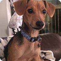 Adopt A Pet :: Beth - Windham, NH