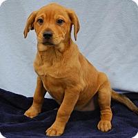 Adopt A Pet :: Marietta - East Sparta, OH