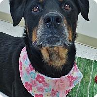 Adopt A Pet :: Jazmine - Chambersburg, PA