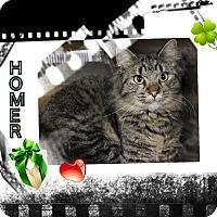 Adopt A Pet :: Homer - Harrisburg, NC