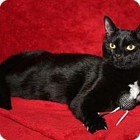 Adopt A Pet :: Jason (Neutered) - Marietta, OH