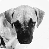 Adopt A Pet :: Carlos - oakland park, FL
