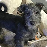 Adopt A Pet :: 'B1' - Agoura Hills, CA