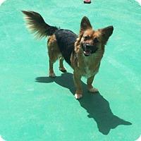 Adopt A Pet :: Nina - Big Spring, TX