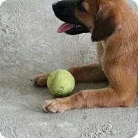 Adopt A Pet :: Canela - Jenkintown, PA