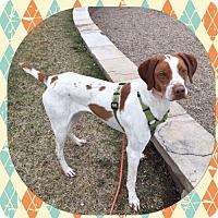 Adopt A Pet :: CO/Riley - Seattle, WA