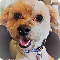 Adopt A Pet :: Brooke Shire - Boston, MA