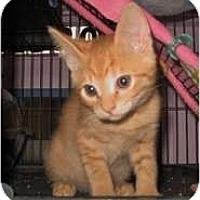 Adopt A Pet :: Peter - Shelton, WA