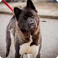 Adopt A Pet :: Lulu - Toms River, NJ