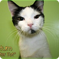 Adopt A Pet :: Tatum - Bartlett, TN