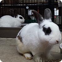 Adopt A Pet :: Morris - Williston, FL