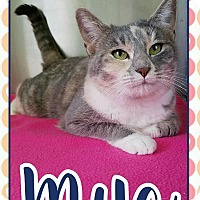 Adopt A Pet :: Maya - Edwards AFB, CA