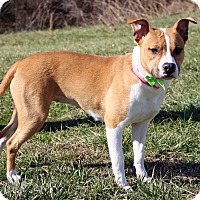 Adopt A Pet :: Sommer - Waldorf, MD