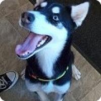 Adopt A Pet :: Sahara - Lemoore, CA