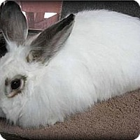 Adopt A Pet :: Sherlock - Williston, FL
