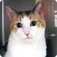 Adopt A Pet :: Zoey - Bellevue, WA