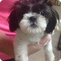 Adopt A Pet :: Cupcake - Pompton Lakes, NJ