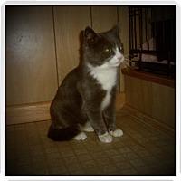 Adopt A Pet :: SAWYER - Medford, WI