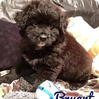 Adopt A Pet :: Bryant - Milton, GA