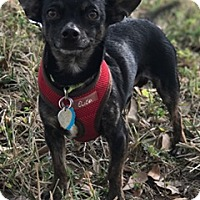 Adopt A Pet :: Sergio - Davie, FL