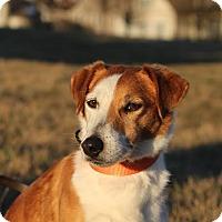 Adopt A Pet :: Richie - Franklinville, NJ