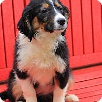 Adopt A Pet :: Nick - E. Wenatchee, WA