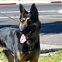 Adopt A Pet :: Colby - Goodyear, AZ