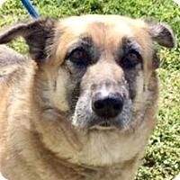 Adopt A Pet :: Ms Deena - West Palm Beach, FL