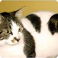 Adopt A Pet :: Sophia - Medway, MA