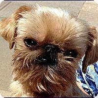 Adopt A Pet :: ROCKY - ADOPTION PENDING - Little Rock, AR