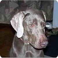 Adopt A Pet :: Tala - Attica, NY