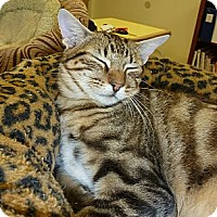Adopt A Pet :: Toby - Lake Charles, LA
