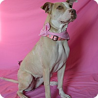 Adopt A Pet :: Lady - Aurora, CO