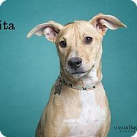 Adopt A Pet :: Pita - Phoenix, AZ