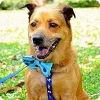 Adopt A Pet :: Billy - Surrey, BC