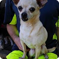 Adopt A Pet :: Chico - Louisville, KY - Dayton, OH