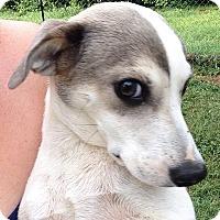 Adopt A Pet :: Prim meet me 7/22 - Manchester, CT