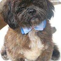 Adopt A Pet :: Jelly Bean - MEET ME - Norwalk, CT