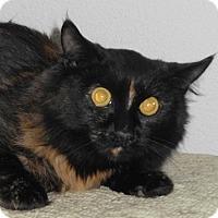 Adopt A Pet :: Guccie - North Highlands, CA