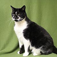 Adopt A Pet :: Mustache - Marietta, GA