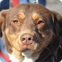 Adopt A Pet :: Blossom - Osage Beach, MO