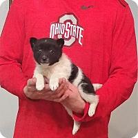 Adopt A Pet :: Artie - New Philadelphia, OH