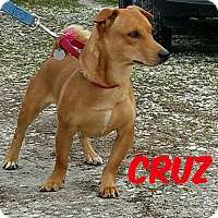 Adopt A Pet :: Cruz-adoption pending - Hanna City, IL
