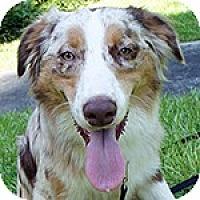Adopt A Pet :: Arty - PENDING - Savannah, GA