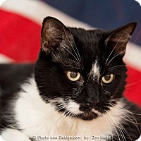 Adopt A Pet :: Bosco - Fountain Hills, AZ