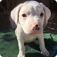 Adopt A Pet :: China - Henderson, NV