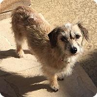 Adopt A Pet :: Winnie - San Antonio, TX