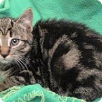 Adopt A Pet :: Joy - Lebanon, PA