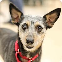 Adopt A Pet :: Kai - CUMMING, GA