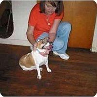 Adopt A Pet :: Found in Houston - Houston, TX